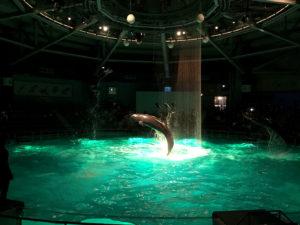 イルカさんのジャンプ