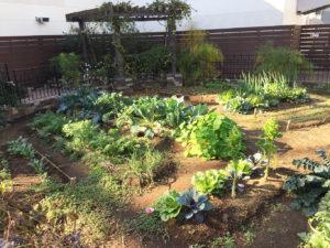 みんなの庭菜園