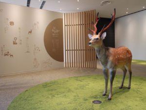 2F観光情報コーナーの鹿