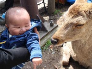 鹿さんを見てニコニコ