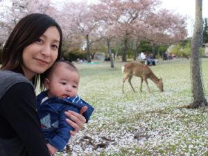 奈良公園でお花見
