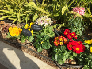 ベイガーデンの花壇