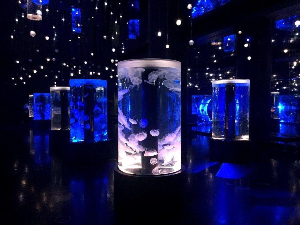 Jellyfish Ramble