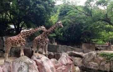 横浜市金沢動物園