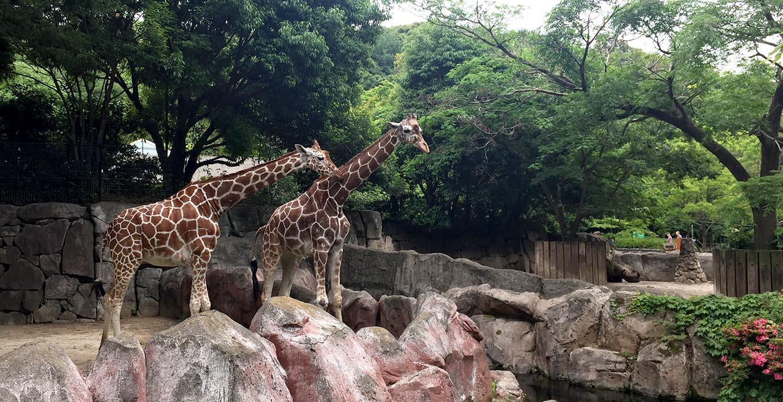 動物園 金沢 自然