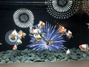 金魚たちが美しい