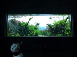 自然水景ゾーン