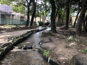 徳持公園水遊びエリア