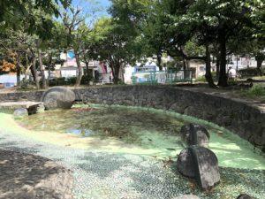 水遊び下流の水の溜まり場