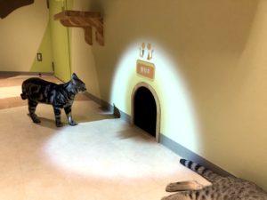 猫が入るとトイレの音がなる