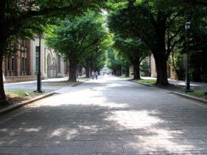 正門から続く銀杏並木
