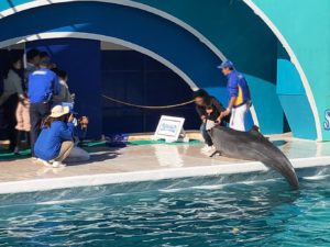 イルカにタッチしている様子