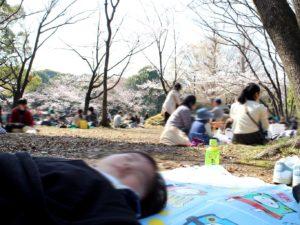 北の丸公園でピクニック