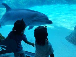 イルカがガラスに寄ってきてくれます