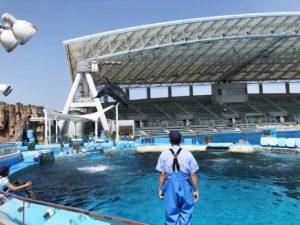 スタジアム奥のイルカ水槽でジャンプを間近に見る
