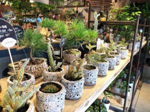 観葉植物のショッピングエリア